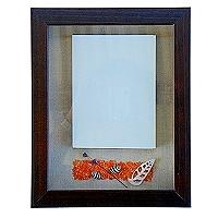 家飾飾品-海洋風立體像框